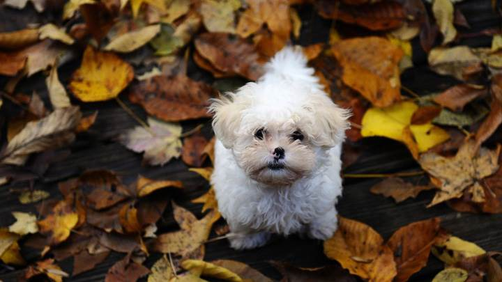 Cute Little Puppy Standing On Leaves